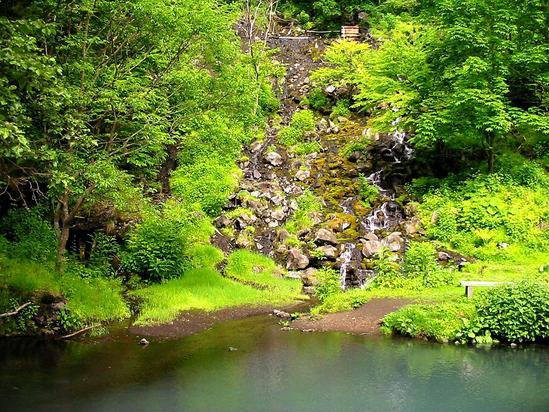 オンネトー湯の滝 外来種駆除作戦スタート